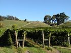 Vineyards in Havelock North